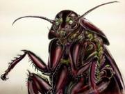 ゴキブリ1998457u