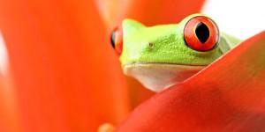 Amphibians-Frog-s