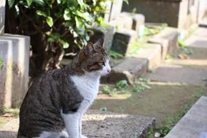 墓地に猫afb818443238ddfef544f7417caafc20_s