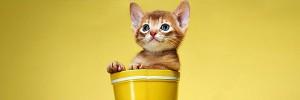 バケツ猫Smile-Cat-s