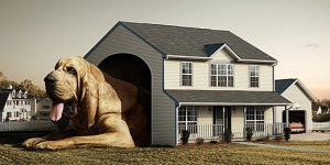 Houses-Dog-s