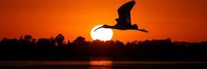 月と鳥Bird-s