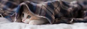 隠れ猫Kitten-s
