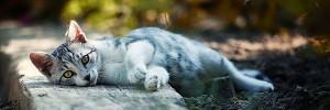 猫 白Cat-s