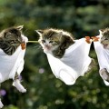 猫の迷惑に対策グッズは?どれもじきに学習されてしまう中で…