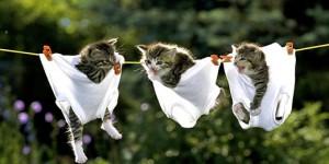 Animals-Kittens-s