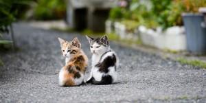 Kittens-s