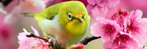 Lovely-Japanese-White-Eye-Bird-s