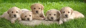 Puppy-s
