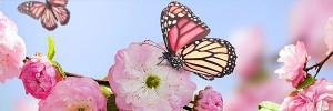 桜 蝶Butterfly-Flower-s