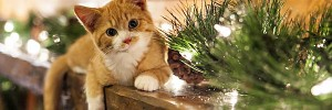 猫と松waiting-for-christmas-s