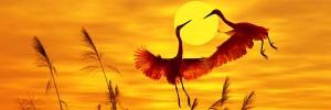 鶴と月Free-to-fly-s