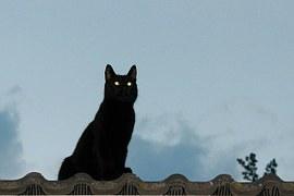 黒猫 cat-339181__180