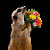 アルジャーノンに花束を の感想文例!市長賞受賞作【2000字】に学ぶ
