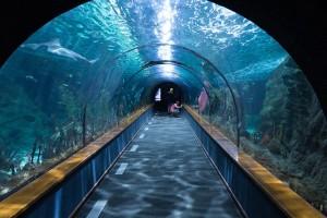 海底トンネルshark-tunnel-473012_640