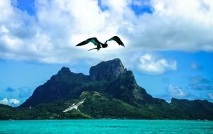 島と鳥 bora-bora-701840_640