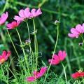 夏の庭(湯本香樹実) のあらすじ 簡単/詳しくの2段階で解説