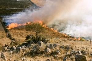 野火grass-fire-807388_640
