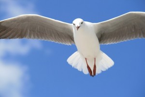 鳩dove-690170_640