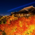 京都の紅葉ライトアップ名所ランキング!幽玄美のベスト5は?