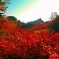 東福寺 紅葉の見ごろは?京都一の紅葉名所「通天橋」を渡ろう
