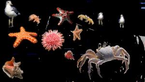 蟹などsea-urchin-666131_640