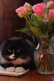 ネコとバラ ダウンロード