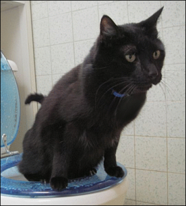 Toilet_Trained_Cat