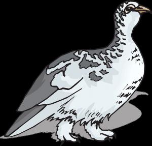 bird-46530_960_720